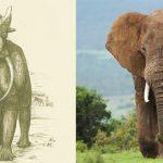 먼 미래에서 현대의 동물을 복원한다면?