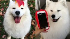 개가 아이폰과 대화한다?… '멍멍' 짖으니 Siri가 대답했다