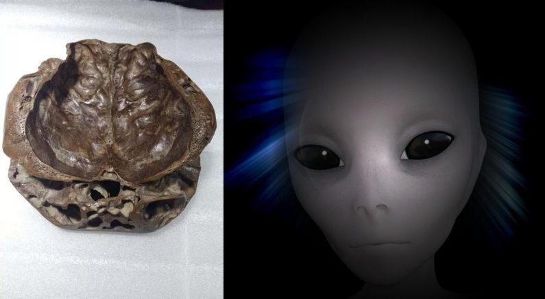 외계인 두개골 발견?…중국서 아마추어 UFO학자 주장