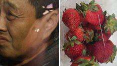 호주 '바늘 딸기' 용의자는 전직 딸기농장 직원