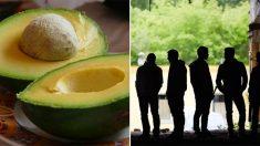 과수원 한 곳에서만 매년 6억원 번다는 '녹색 황금' 아보카도, 유럽서 쫓겨날 판