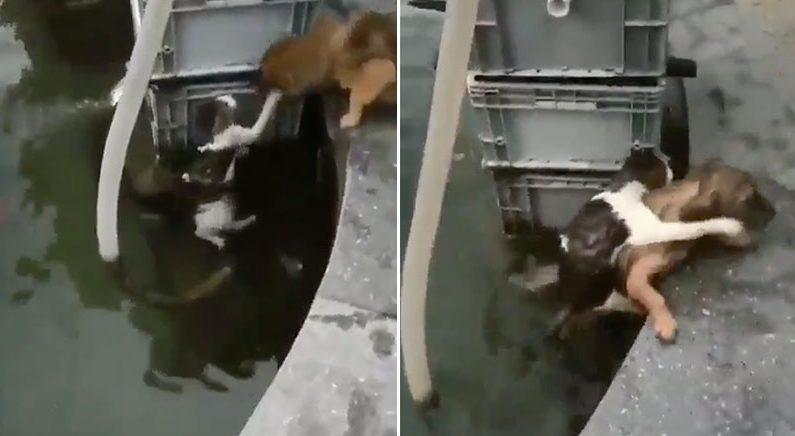 '물에서 건져주고 뺨 맞고' 트위터 난리난 댕댕이의 고양이 구조 영상