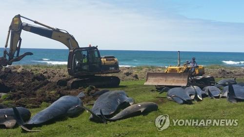 고래가 해변에 올라와 떼죽음하는 이유는?
