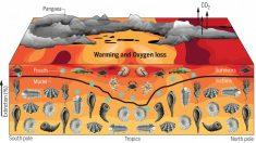 약 2억5천만년 전 바다생물 대멸종 원인은 수온 상승
