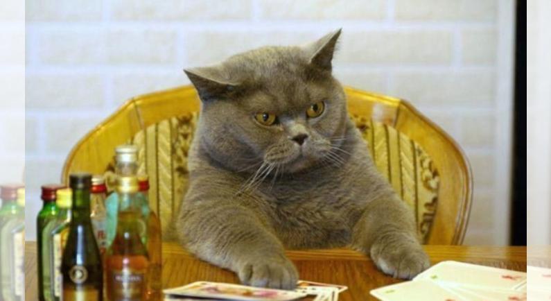 보고만 있어도 기분이 좋아지는 고양이 사진10