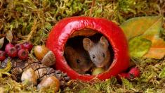 생쥐 가족에게 '멋진 집' 선물한 사진작가