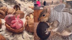 '호두' 크기 갓난쟁이 다람쥐…멋진 '뉴요커' 되다!