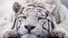 매력 발산, 고양잇과 동물 사진 10