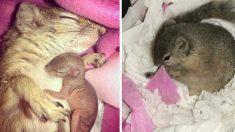 서랍에 보금자리 만든 귀여운 다람쥐