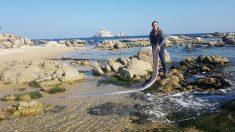 바닷가 산책하던 강원도 주민이 발견한 길이 4.2미터 대형 심해어 '산갈치'