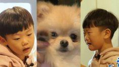 유기견 '욤이' 슬플까 봐 '뒤돌아서 흘린' 6살 시안이의 눈물