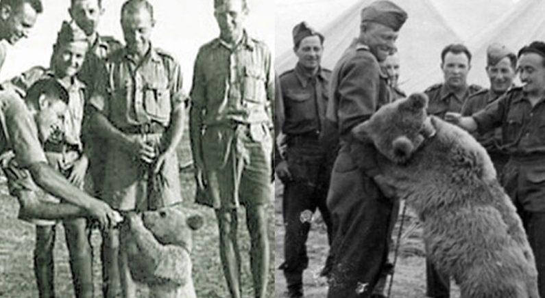 2차 대전에 병사로 참전했다가 하사로 전역한 실제 '불곰'