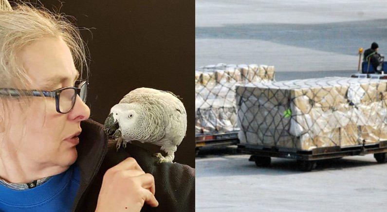 아마존 알렉사로 주문도 가능한 '아프리카 회색 앵무새'