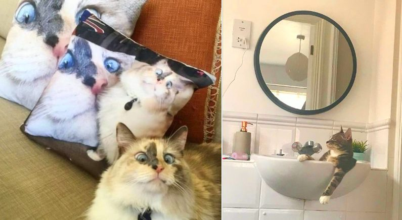 '어디에나 있다' 일상 속 포착된 고양이들의 발랄한 모습