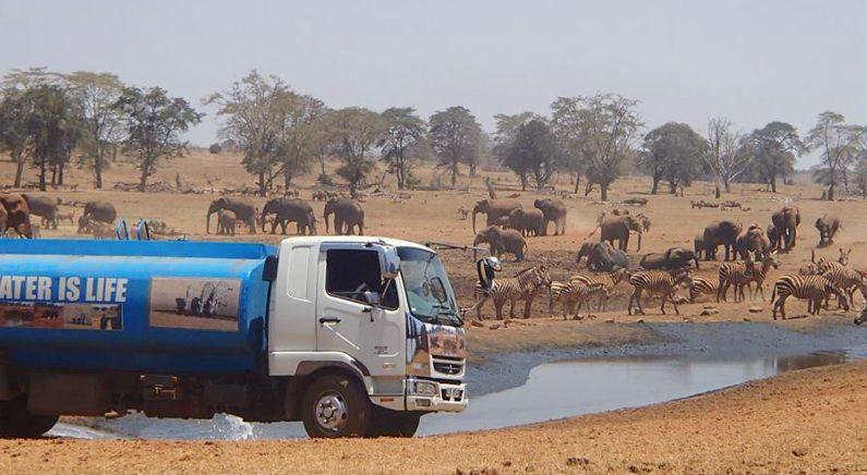 아프리카 야생동물을 위해 물을 배달하는 남성