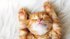 알쏭달쏭한 고양이 언어를 알아보자, '이봐 집사! 내 말 이해했냥?'