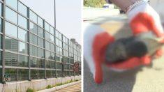 '디자인의 힘' 투명 방음벽에 떼 죽음당하던 새들을 살려
