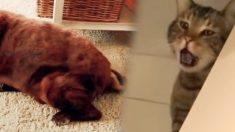 강아지가 뀐 어마어마한 방귀…고양이 친구가 기겁하는 장면(영상)