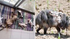 동물 엄마들이 아낌없이 주는 사랑 '동물 육아' 라이프 사진 22
