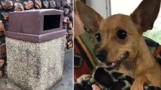 고속도로 주변 쓰레기통에 버려진 채 발견된 강아지…굶주림·추위 떨어