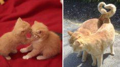 """""""부러우면 지는 건가"""", 알콩달콩 고양이 커플의 '닭살' 돋는 사랑 표현"""