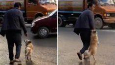 '이런 개는 처음이야' 주인 손 잡고 길 건너는 강아지