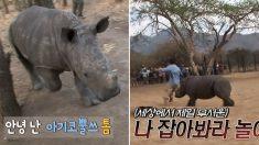 '살벌하게 귀엽다' 힘 조절 미숙한 7개월 아기 코뿔소