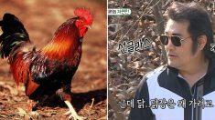 '의리남, 강한 남자의 아이콘' 김보성, 닭이 제일 무서워 치킨도 못 먹는다