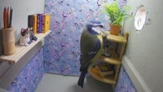 놀라운 '새' 집 인테리어, 진짜 새가 날아 들어와