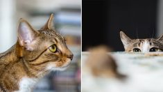 """""""고양이를 들인 후부터 집에서 바퀴벌레가 안 보이게 됐습니다"""""""