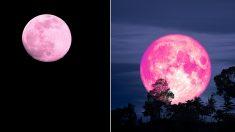 """""""오늘(19일) 하늘에서 보름달 형태 '핑크문' 볼 수 있다"""""""