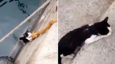 깊은 배수구에 빠져 몸부림치던 고양이, 행인이 준 밧줄 잡고 살아나..