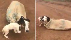 인적 드문 도로에 '자루째' 버려진 강아지 가족 (영상)