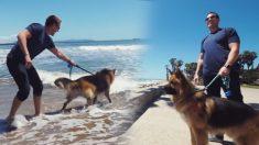 '바다를 처음 보고 행복한 셰퍼드', 수년간 목줄에 묶였던 개가 구조되어 세상과 만날 때