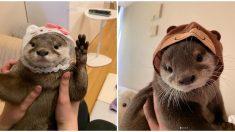 동물 모자 쓴 동물은 얼마나 귀여울까? '모자 쓴 수달' 심장 폭격 중