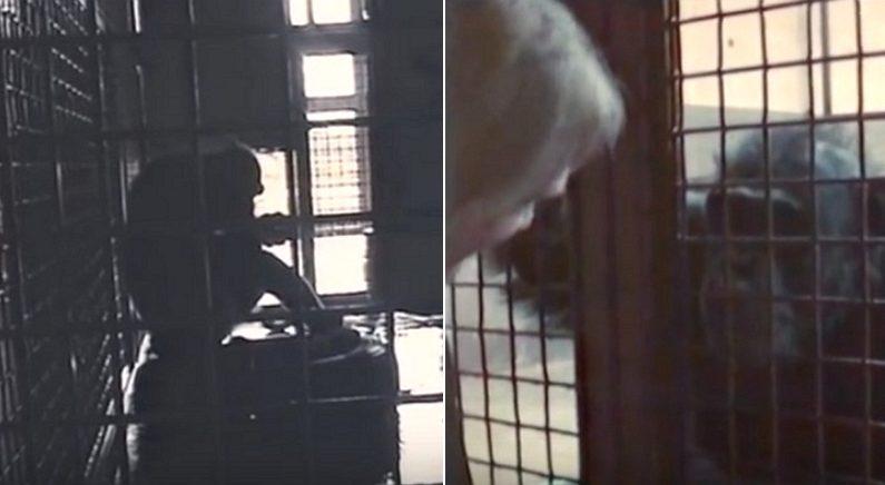 실험실에서 수화 배운 침팬지가 사육사에게 진심으로 처음 전한 말