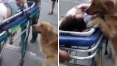 """갑자기 쓰러진 보호자 곁에서 '전전긍긍'한 강아지 """"멍멍! 누가 좀 도와줘요!"""""""