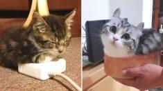 격하게 고양이가 기르고 싶어지게 만드는 '집사'들의 직샷 창고