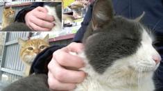 주인 품에 안긴 고양이 친구 보고 시선 뗄 줄 모르는 길고양이