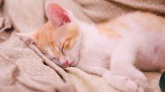 고양이가 편안한 전용침대 놔두고 굳이 누추한 집사 이불에 누워 있는 이유
