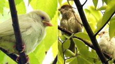보는 사람에게 행운 가져다준다는 '희귀새' 아기 흰 참새가 경기도서 발견됐다