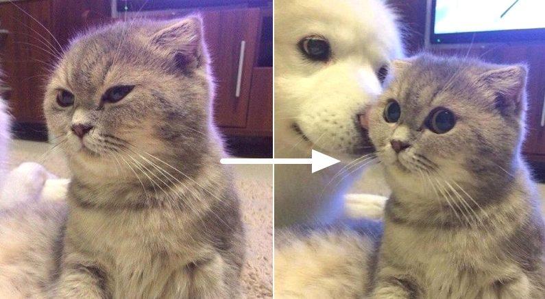 잔뜩 삐져 있다가 친구 강아지 뽀뽀 받고 눈 커진 고양이