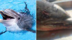 미국 해양대기청, 4400만원 현상금 걸고 '병코돌고래 살해범' 추적