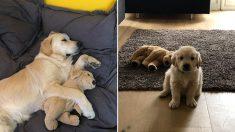어릴 적 친구였던 '강아지 인형'을 커서도 계속 애지중지 돌보는 '의리갑' 인절미