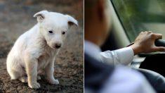 """""""강아지는 자신을 버린 주인 차를 놓치고 그 자리에서 울고 있었다"""""""