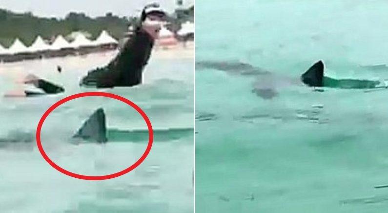 제주 해수욕장서 상어 출몰…100여 명 긴급 대피 (영상)