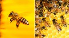 영특한 벌, 보상·처벌 훈련으로 다섯까지 셀 수 있어
