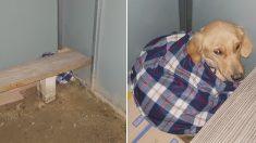 '크리스마스 이브날' 버스정류장에 버려진 강아지에게 '담요' 덮어준 누리꾼