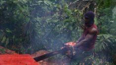 중국, 아프리카 삼림 벌채 급증…현지 전문가·활동가 경종
