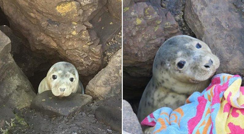 바위틈에 끼어 옴짝달싹 못 하다 극적으로 구조된 아기 바다표범